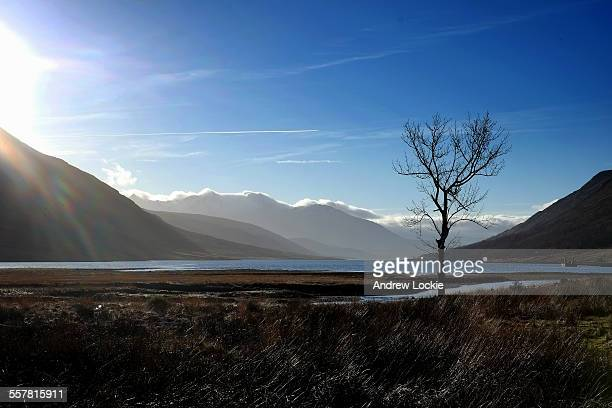 Single tree on the banks of Loch Etive, Scotland