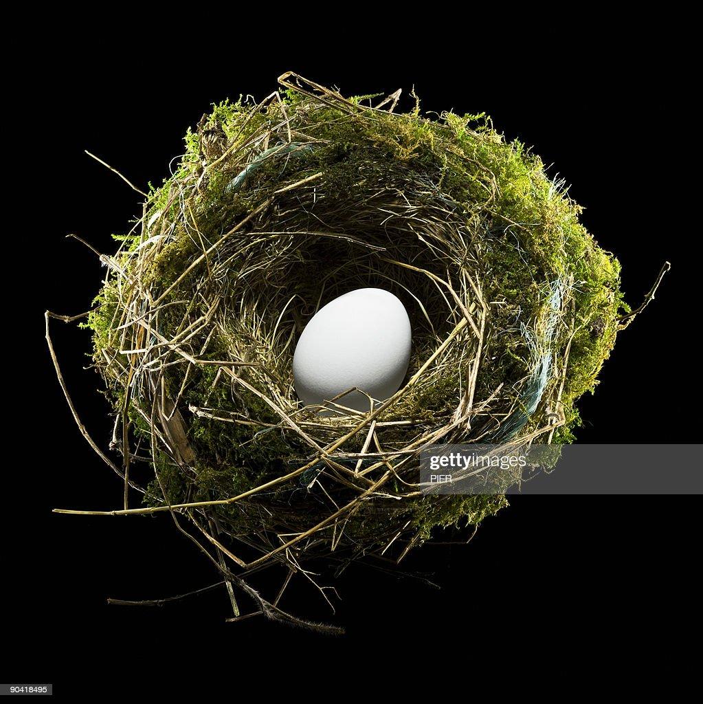 Single white bird egg sat in a birds nest
