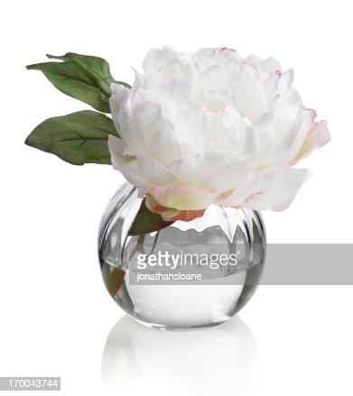 Single white Peony in round vase on a white background
