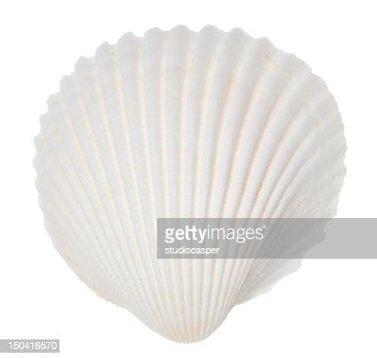 A singular white ocean shell on white