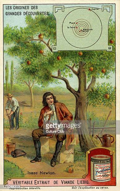 Sir Isaac Newton and the theory of gravity sitting next to an apple tree with falling apples English physicist mathematician astronomer natural...