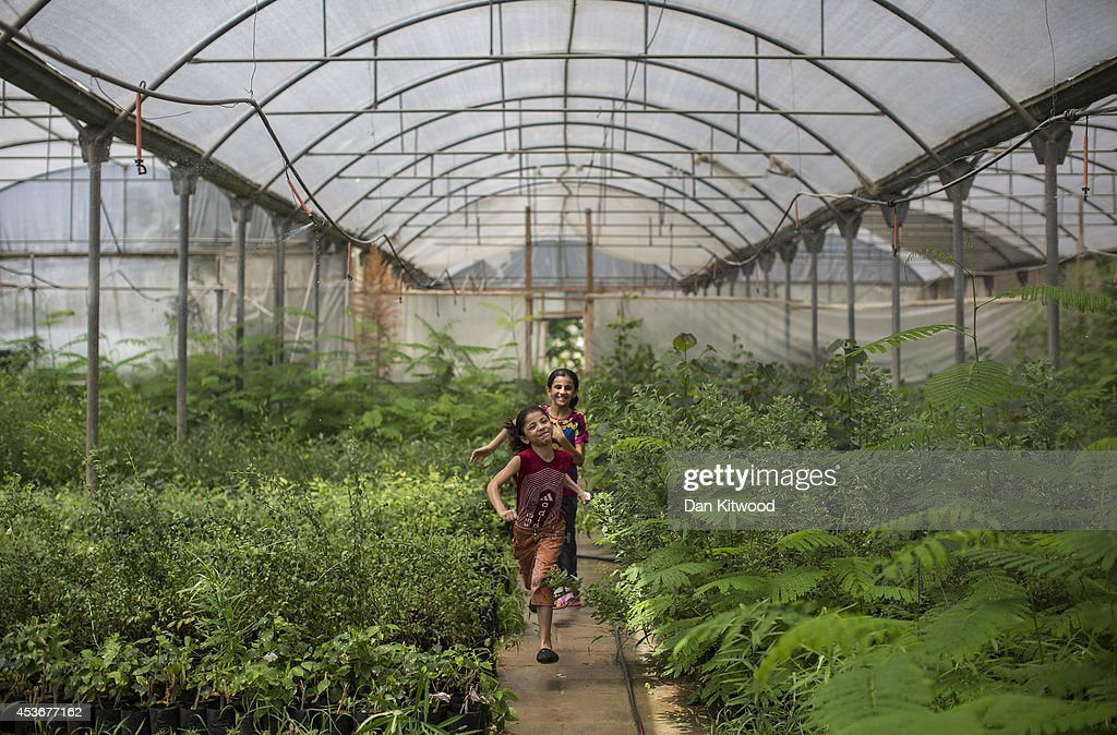 Sisters Nour and Saja Al Banna cool down by running through a greenhouse irrigation system on August 16, 2014 in Gaza City, Gaza. A five-day ceasefire between Palestinian factions and Israel continues as part of efforts aimed at reaching a permanent truce deal. The Palestinian death toll from Israel's weeks-long military onslaught on the Gaza Strip has risen to 1959, according to a Palestinian Health Ministry spokesman.