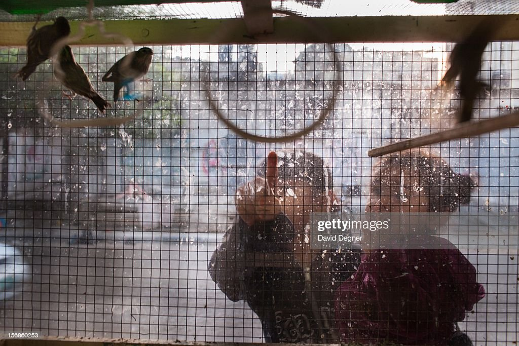 Sisters watched the caged birds in a small store specializing in pet birds, in Gaza City Gaza on November 22, 2012.