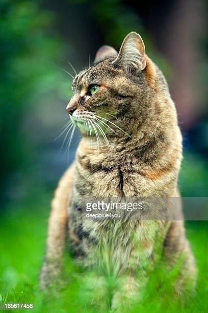 Sitzt Katze im Gras Hintergrund
