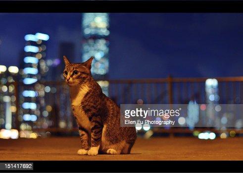 Sitting cat : Stock Photo