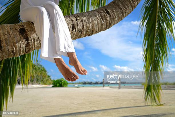 Sitzt auf Palm Tree