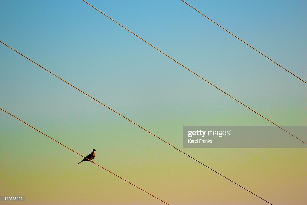 Sitting on power lines : Stock Photo