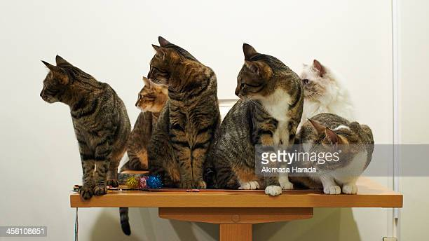 Six cats looking at the same direction