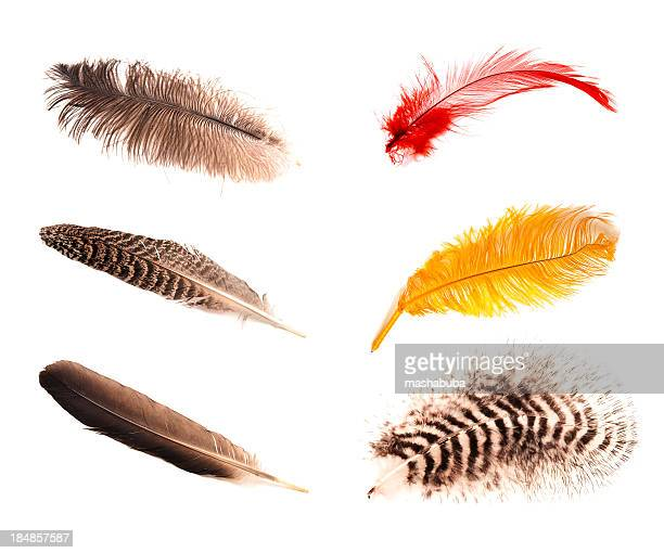 Six different feathers.