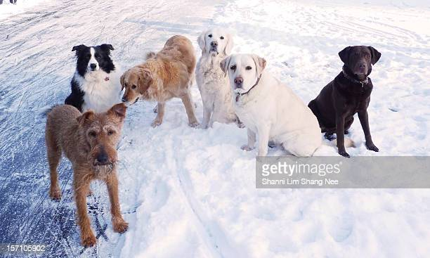 Six dogs sitting in snow