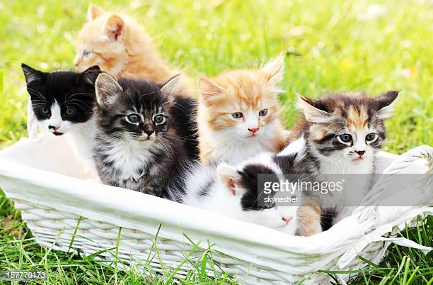 Six little cats in basket outdoor.