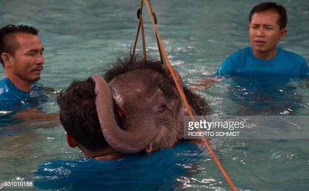 TOPSHOT Six monthold baby elephant 'Clear Sky' rests her head on the shoulder of one of her guardians during a short break in a hydrotherapy session...