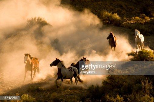 Six Wild Horses running across desert-kicking up dust