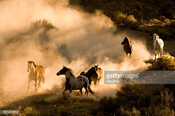 Six Wild Horses running across desert-kicking up dust