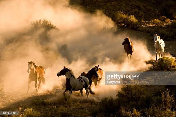 Six chevaux sauvages courir à travers le désert, en faisant voler la poussière