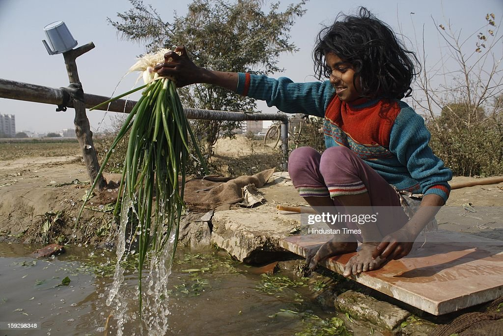 A six year old Rekha, daughter of a farmer, washes vegetables after gathered them from a vegetable farm on January 10, 2013 in Noida, India. These farmers took the portion of land for contract from the owner & pay them Rupees 4000 (73.30 USD) for One Bhiga (14400 square feet) per year. They grow different vegetables in their contracted fields & make their living by selling them to the distributors.