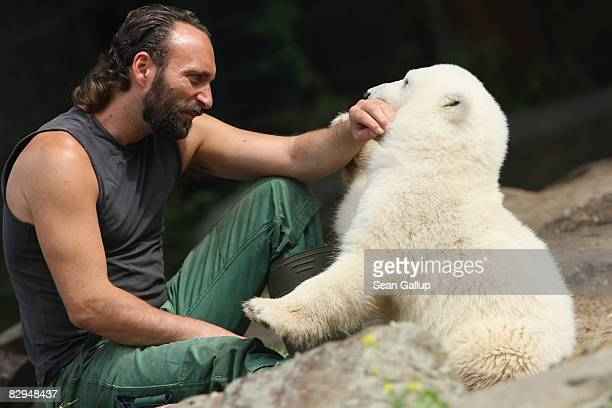 Sixmonthold polar bear cub 'Knut' plays with his keeper Thomas Doerflein at the Berlin Zoo June 22 2007 in Berlin Germany Knut has drawn...