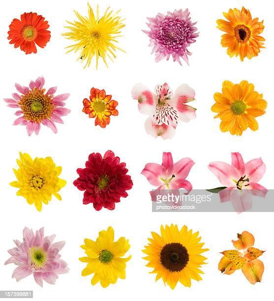 Sixteen different flowers