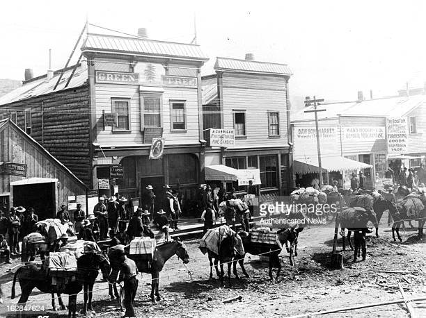 A sizable pack train of horses during the goldrush in Alaska over one thousand horses were kept at work all winter in the Klondike 1900