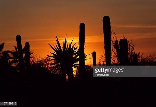 Sizzling Desert Sunset
