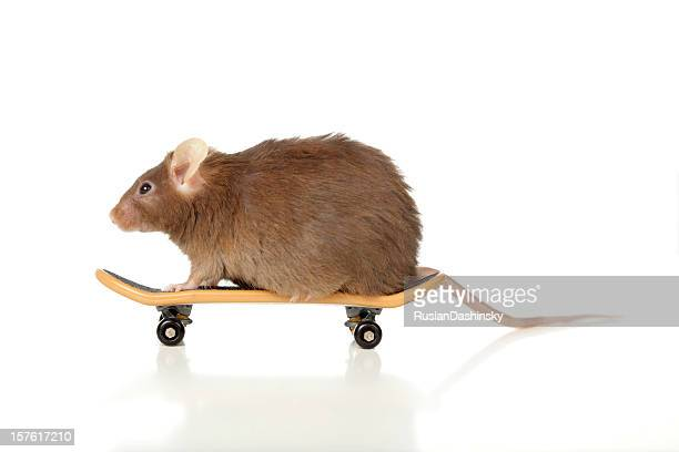 Skateboarder animal.