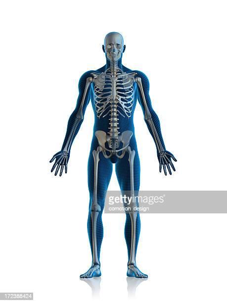 Homme de Skeleton