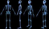 Digital medical illustration: X-ray of human skeleton.