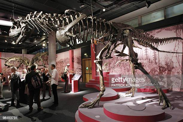 Skeletons of dinosaurs 'Albertosaurus' are displayed on April 9 2010 during the exhibition entitled 'In the Shadow of the Dinosaurs' at the Natural...