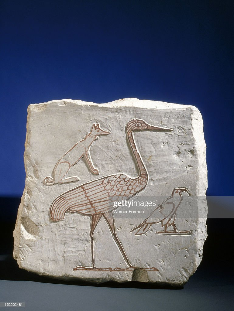 Sketch of a crane a vulture and a basenji Artists often used such drawings on limestone fragments to practice their designs Egypt Ancient Egyptian...