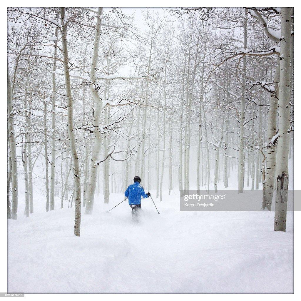 skiing fresh powder through aspen trees