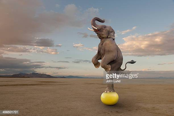 Skilled Elephant Balancing On A Ball