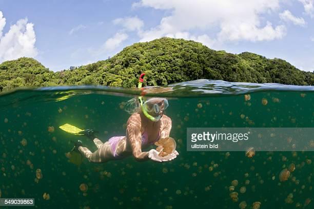 Skin Diving with harmless Jellyfish Mastigias papua etpisonii Jellyfish Lake Micronesia Palau