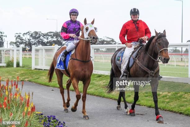 Skulduggery ridden by John Robertson returns after winning the StrathAyr BM58 Handicap at Moe Racecourse on November 21 2017 in Moe Australia
