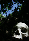 A skull is seen at a village cemetery in Kuban on March 21 2007 near Trunyan Bali resort island Indonesia Unlike the Balinese people the people of...