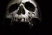 A human skull on a dark background.