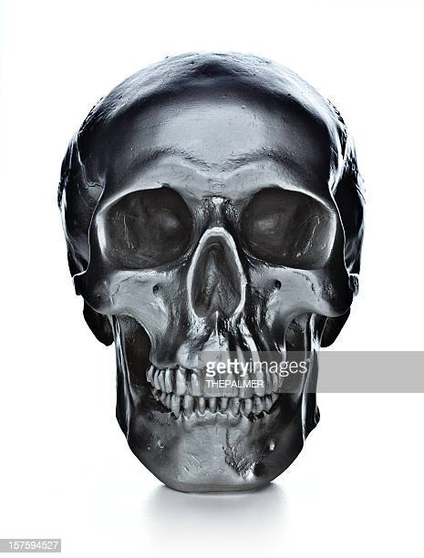 skull on white background