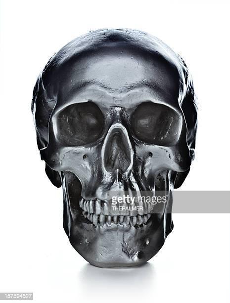 Crâne sur fond blanc