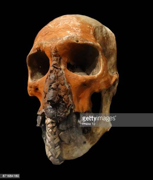Skull trophy from the Tugeri Tribe Fly River New Guinea Dated 1894