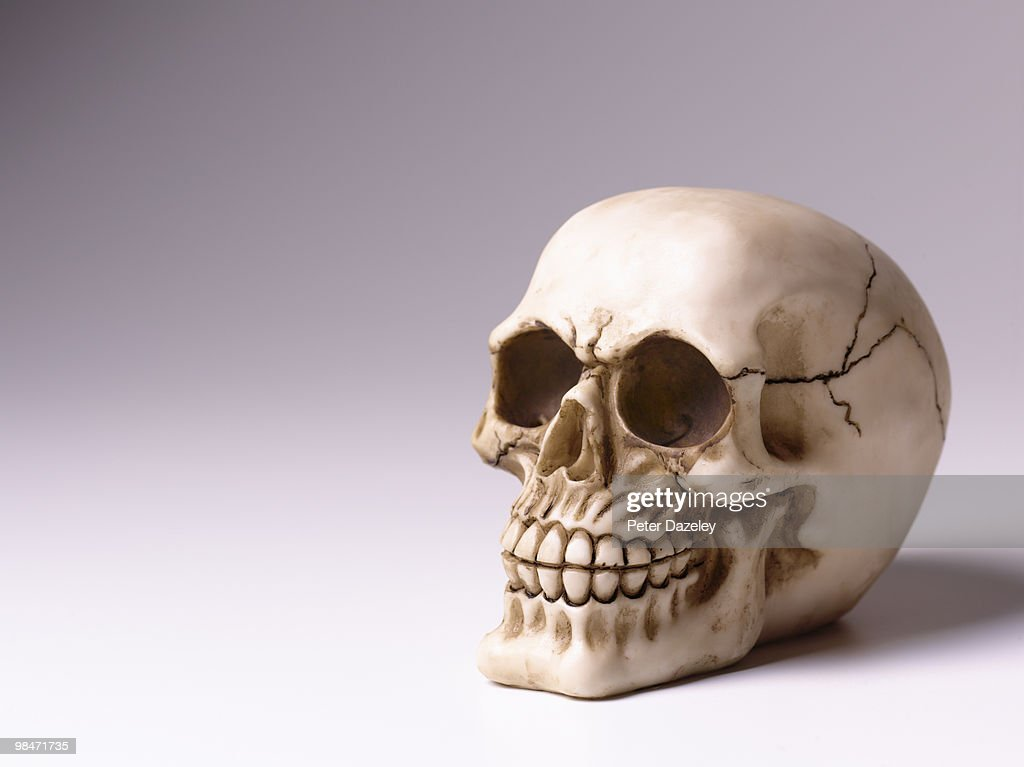 Skull with copy space