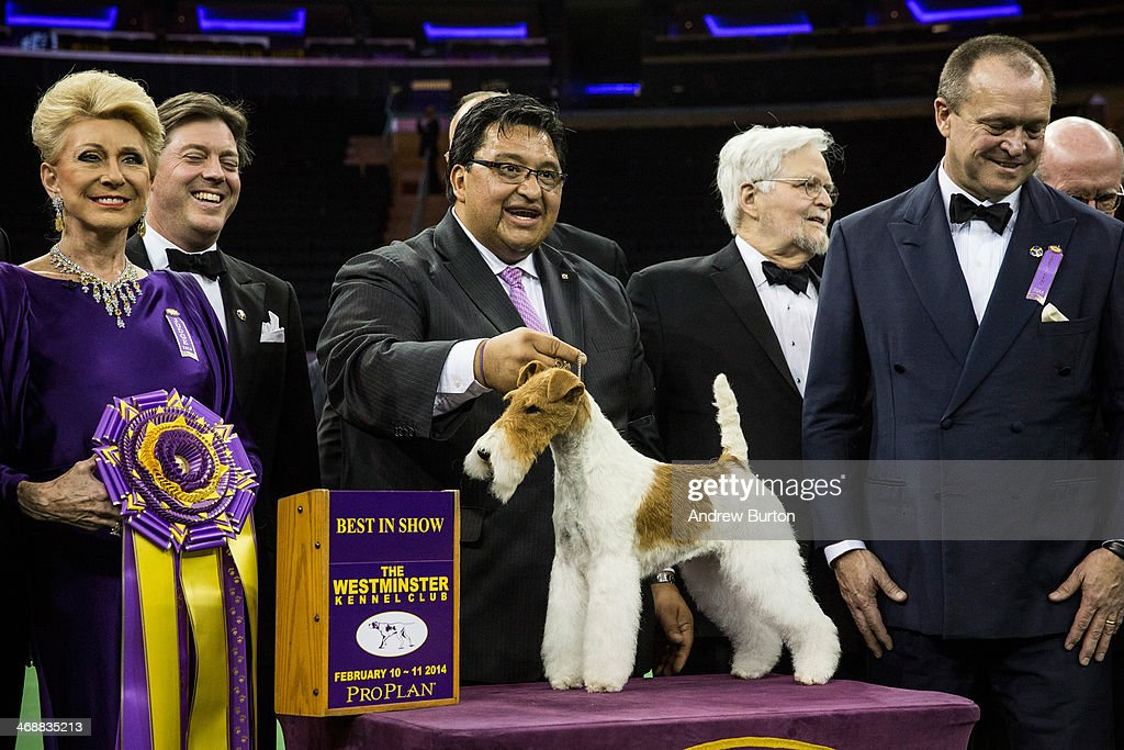 Sky, a Wire Fox Terrier, poses for a photo with her handler, Gabriel Rangel (C), after winning the Best in Show category in the Westminster Dog Show on February 11, 2014 in New York City. The annual dog show has been showcasing the best dogs from around world for the last two days in New York.
