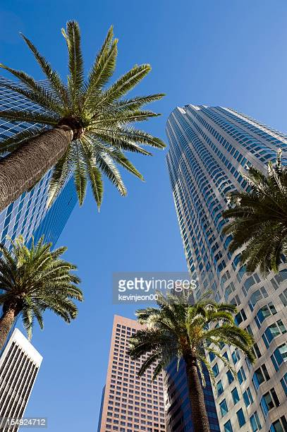 Sky view through palms and buildings, downtown Los Angeles
