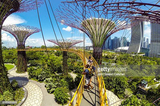 Skywalking at Gardens by the Bay