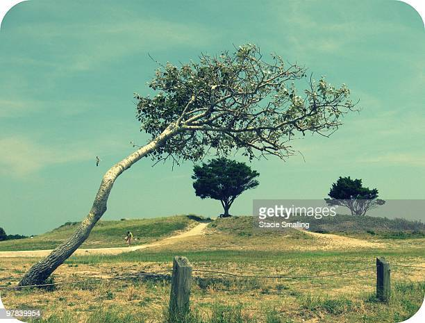 Slanted tree