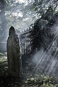 Slanting sunbeams in a spooky graveyard