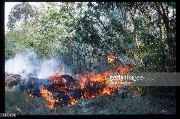 Slashandburn method is used to build agricultural land in the central highlands October 15 1998 in Madagascar The people of Madagascar are...