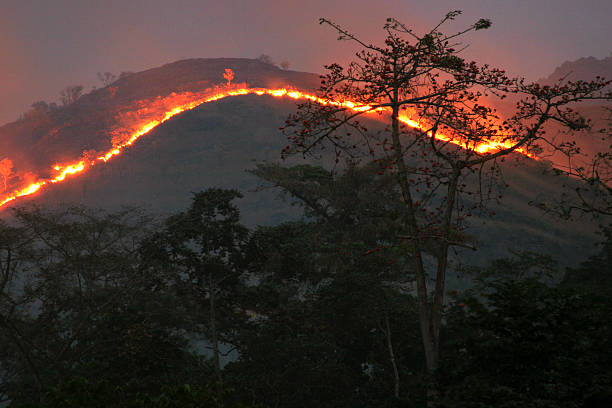 slash and burn pictures getty images