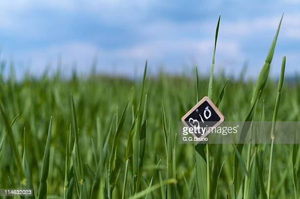 Slate label with hand written BIO in green field