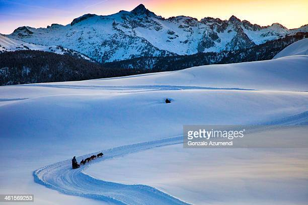 Sled dog on the snow in the Pyrenees mountains.