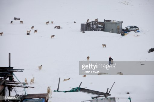Sled dogs scattered on snow by wood shacs : Photo