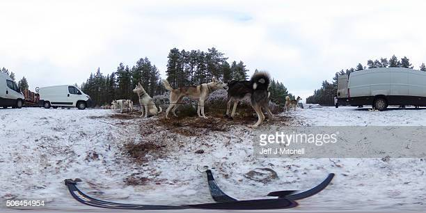 Sledders and their huskies wait to practice at a forest course ahead of the Aviemore Sled Dog Rally on January 19 2016 in Feshiebridge Scotland...